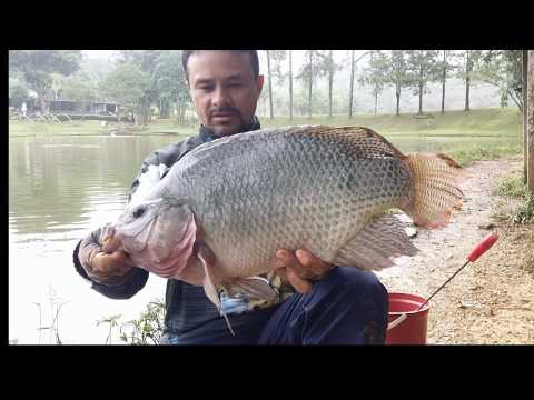 TILAPIA FLY FISHING #4