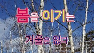 봄을 이기는 겨울은 없다. 자작나무[도종환]