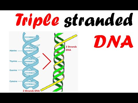 hqdefault - DOCTORS AND SCIENTISTS  HAVE PRESENT PROOF ON EXPANDING DNA STRANDS