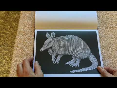 intricate-ink-animals-in-detail-volume-3-coloring-book-by-tim-jeffs