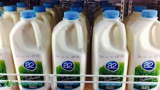 Přináší konzumace A2 mléka nižší riziko autismu?