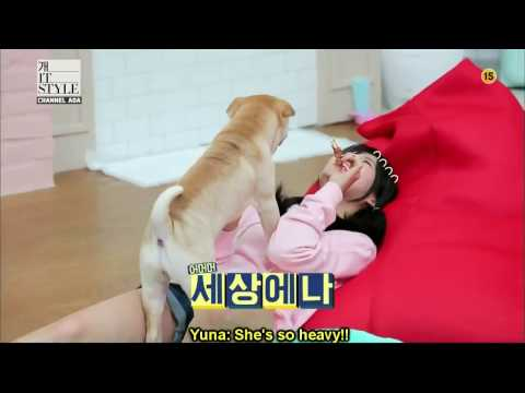 [Eng Sub] AOA Yuna's dog talent show