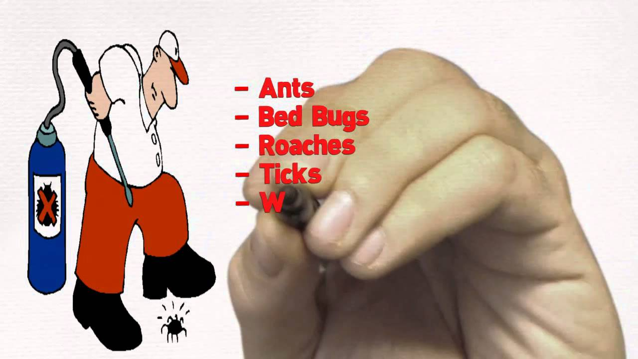 Toro Pest Management: Pest Control & Termite Control Services in Miami, Florida