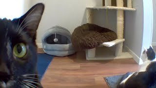 What Do My Cats Do When I'm Not Home? A Weeks Worth Of Kitty Shenanigans (CatCam)