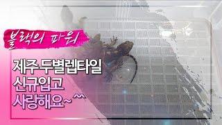 파충류 수입 정리~^^(feat.해피)