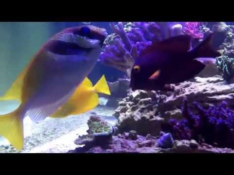 Penn State University, HUB Aquarium