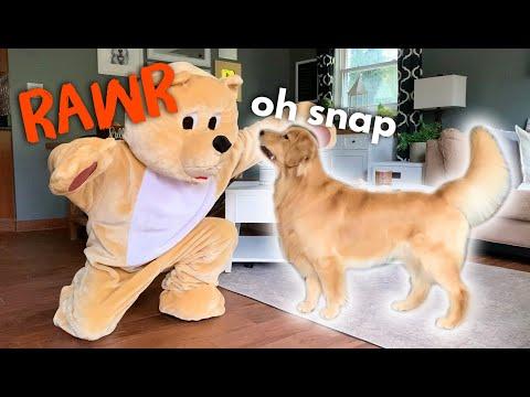 Pranking My Dog With Bear Costume