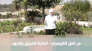 م. امل القيمري - اصابة النجيل بالدود