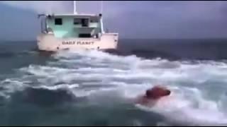 Трогательное видео