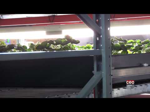 Video Interview with Nick Brusatore, Chairman of Affinor Growers