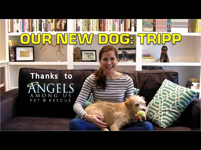 Our New Dog: Tripp   Thanks to Angels Among Us Pet Rescue