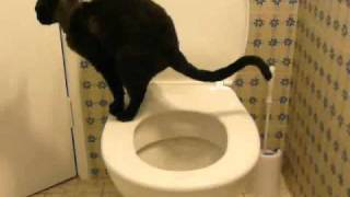 Toilet training my cat. Now fully trained. Stage 4b.