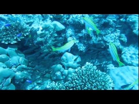 Ecoclip Seychelles - Sustainable Practice for Healthy Reefs Tivaurany