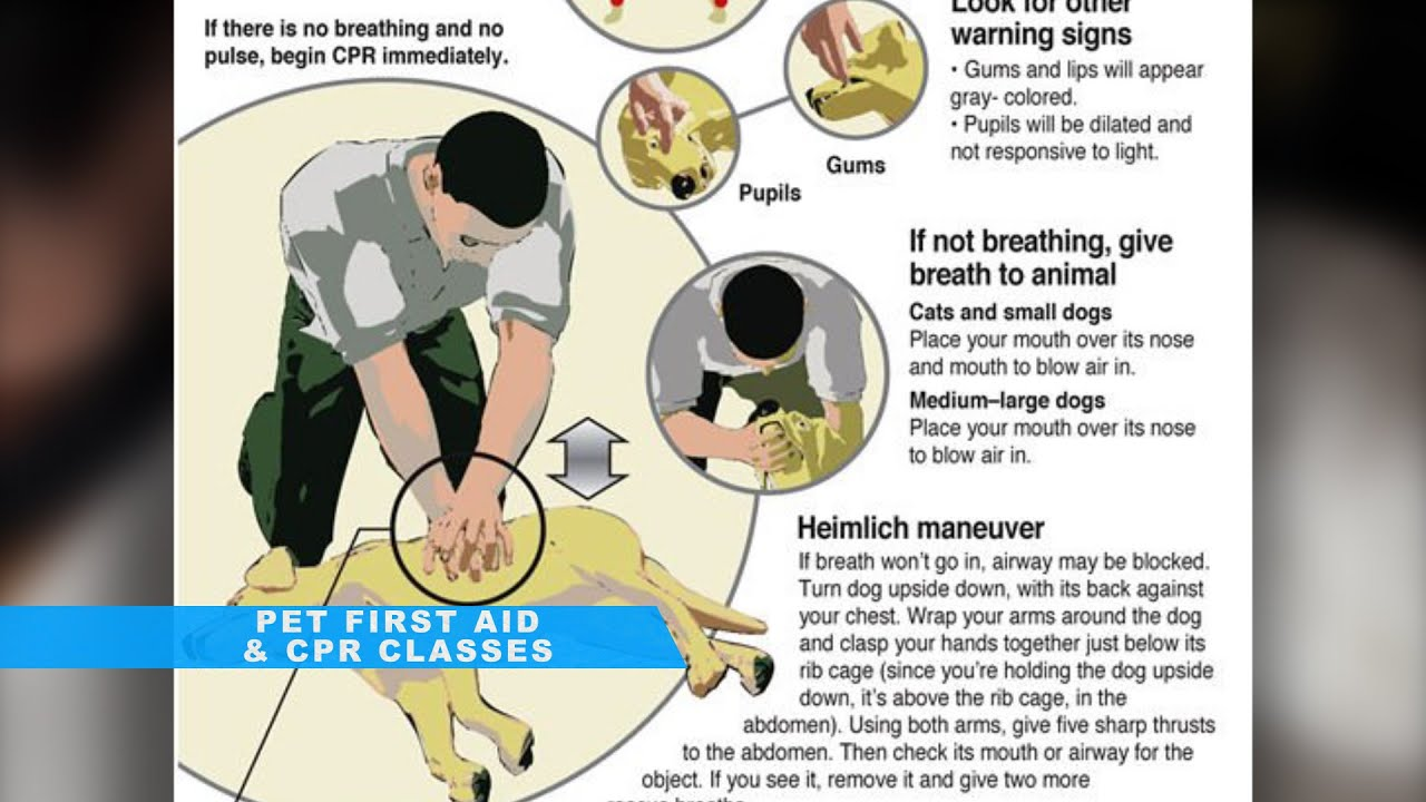 The Buzz Pet First Aid And Cpr Classes Youtube