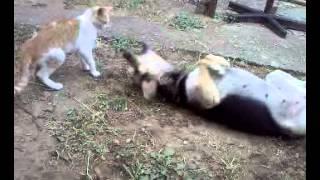 Video-0060.mp4Sta to bese ljubav.Ljubav macke i psa