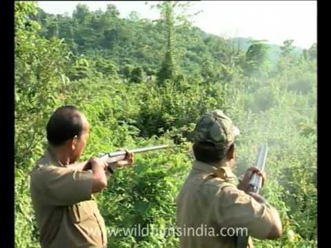 Chasing away elephants with gun shots