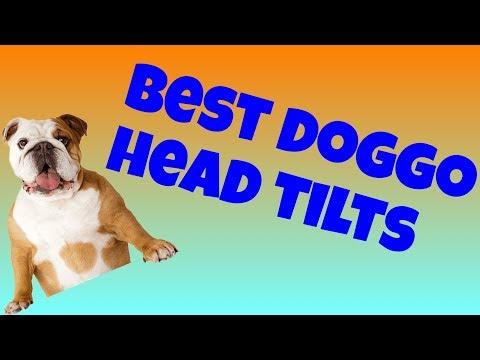 Dog head tilt compilation video (NEW 2019)