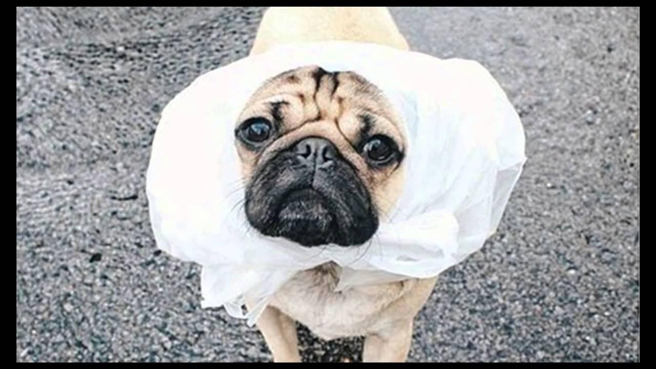 Funny Puppy Memes: Funny Dog Meme
