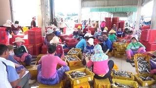 Tin Tức 24h: Quảng Ngãi giải quyết việc làm cho lao động ven biển