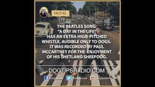 Dog Facts: Paul McCartney: Sounds Only Dogs Can Hear | Sounds That Make Dogs Go Crazy