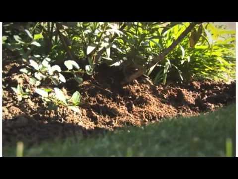 Cuidados del jardin en invierno anasac jard n youtube for Cuidados del jardin