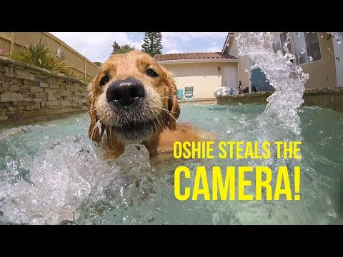 POOL FUN AND OSHIE STEALS THE CAMERA | Oshies World