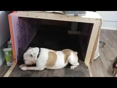 How I Turned My Detached Garage Into A Dog House & Dog Room
