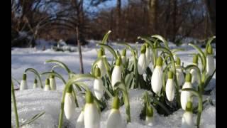 ура весна !
