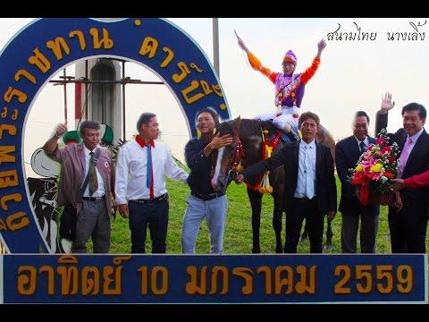 """Danthai: ม้าแข่งชิงถ้วยพระราชทาน""""ดาร์บี้"""" ปีที่ 82 ปี 2559"""