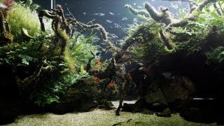 The Big Fish In Giant Custom Aquariums