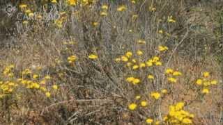 Hike the Rancho La Costa Open Space Preserve