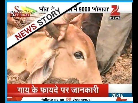 Reality check of Jaipur's Gau Shala - Part II