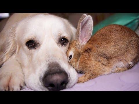Rabbit Shows Dog His Love