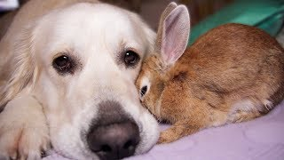 Rabbit Shows Dog His Love