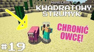 KWADRATOWY STRUMYK #19 - Różowa owca pod ochroną!