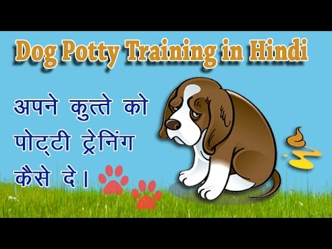 How to Potty Train Your Dog in Hindi ?