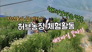 허브농장 체험수업/허브씨앗파종, 허브삽목, 캐모마일 꽃…