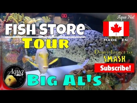 Marine, Freshwater Aquarium Fish Tank Store Shop Tour 🐠 Big