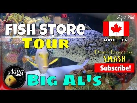 Marine & Freshwater Aquarium Fish Store Tour Of Big Al's Mississauga 🐠