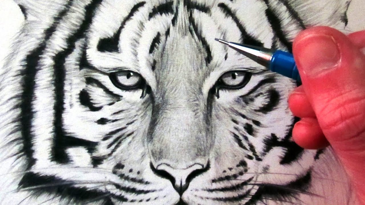 Tiger head drawing tutorial - photo#18