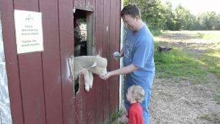 Joe & Jake at the Petting Zoo