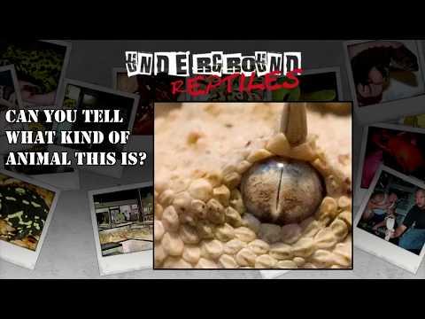 Venomous Bites - 20 MINUTES UNDERGROUND #27