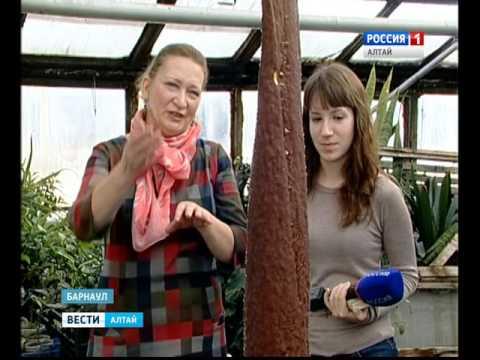 Купить луковицы лилии недорого в интернете – легко: магазин «долина роз » обеспечит быструю и качественную доставку по россии.