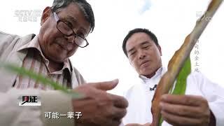 《见证》 20200410 澜湄新华侨 第一集 缅甸的金土地| CCTV社会与法