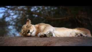 South Africa Tourism Promo thumbnail