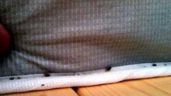 bed bug exterminator Phoenix AZ