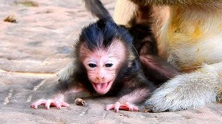 Brittany Is Not Normal For Baby Monkey To Be Held Upside Down | Brittany Screams To Let Mom Know