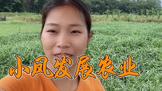 Dad Feng develops farming at home, Xiao Feng also wants to join in planting vegetables