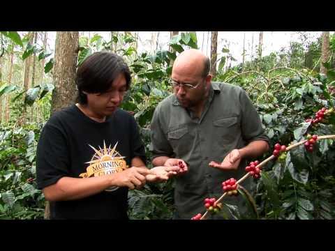 Coffee Trails - Indonesia