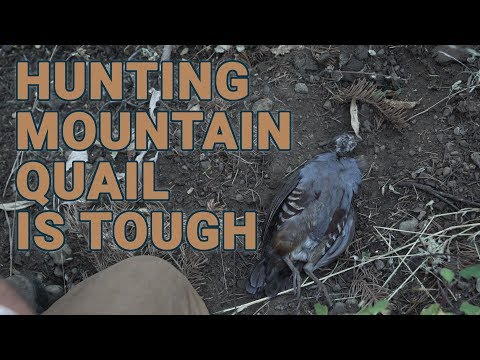 Mountain Quail In The High Sierra Is One Tough Bird To Hunt